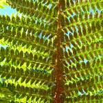 """Fern art prints Green Forest Ferns Baslee Troutman"" by BasleeTroutman"