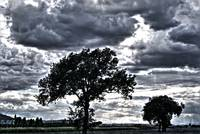 Stormy sky with clouds closed, lonely tree