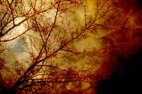 Gothic Textured Red Trees Fine Art Photo