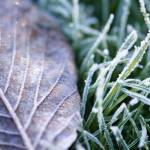 """leaf and grass"" by EdVincent"
