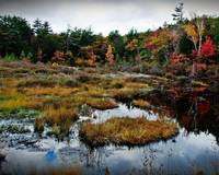 Fall Scene  In Templeton  Massachusetts