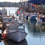 """Maine Lobster Boats in Port"" by GordieSea"