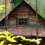 """Sugar Shack in Weissner Woods"" by chrisromano"