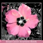 """Breast Cancer Awareness"" by MHP-Photography"