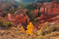 Fall In Bryce Canyon