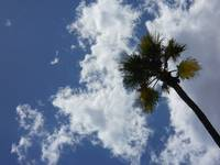 Palm Tree and Sky