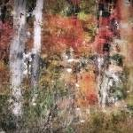 """Fall Scene in Harrisville New Hampshire"" by bavosiphotoart"