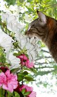 O'Mally Smelling The Flowers