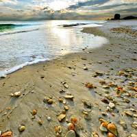 """Beach Shells Sunset Print Fine Art Landscape"" by eszra"