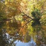 """Mill Creek Reflections"" by Monnie"