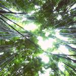 """Bamboo Sky"" by mclainphoto"