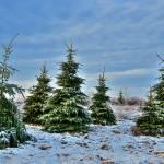 """Snow & Ice"" by bsphotos"