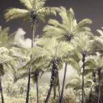 """Palms"" by diannepoinskiphotography"