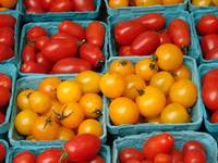 Red & Yellow Tomatoes