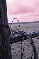 Barbed Wire1