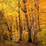 """""""Autumn Trail"""" by Trailheads"""