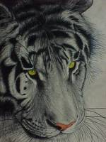 Tiger Limited Edition Prints
