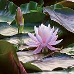"""Lilly Pad Flower"" by reynolds"