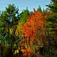 New Hampshire Autumn Abstract Reflection