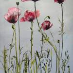 """poppies"" by arlen"