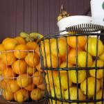"""Basket of Oranges"" by colleenflynn"