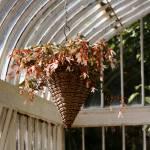"""Flower Basket"" by colleenflynn"
