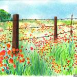 """Field of Poppies"" by sharonblanchard"