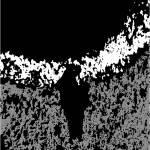 """""""black phantom"""" by georgekaplanimages"""