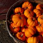 """Fall bounty"" by anna_williams"
