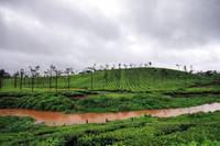 Beautiful tea gardens of Valparai
