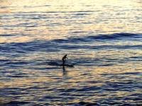 Sunset Surfer in Pacific Ocean 1