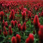 """Red Flower Grass Stuff"" by parisvega"