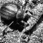 """""""Beetle"""" by davidanderson"""