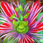 """Red Passionflower"" by laurenmcmullen"