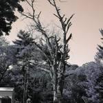 """""""Tree 2"""" by eflynn"""