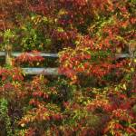 """""""Fall Arrangement by Jim Crotty"""" by jimcrotty"""