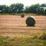 """Hay For Horses"" by EyesofTexasphotography"