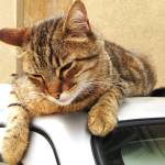 """""""Nodding off!"""" by CarrieWaters"""