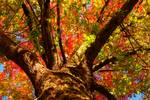 """Colorful Autumn Abstract by James """"BO"""" Insogna"""