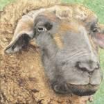 """Sheep on High Peak Farm"" by GayleMadeira"