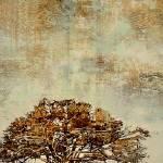 """""""""""Sjambok Pod"""" Cassia abbreviata"""" by BrianRolfeArt"""
