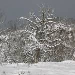 """""""Snow scene - NSW Snowy Mountains"""" by Highcountryimaging"""
