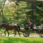 """Central Park Carriage Ride"" by jben50"