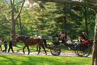 Central Park Carriage Ride