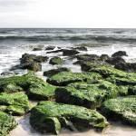 """Green Rocks"" by tom-macpherson"
