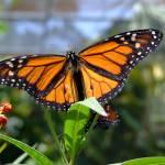 """""""butterfly"""" by robertwalkerphotography"""