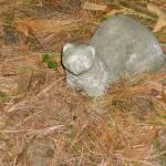 """""""Stone Ferret"""" by eflynn"""