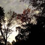 """""""Clouds"""" by eflynn"""
