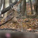 """""""Resting Whitetail Buck - 2"""" by dteetor2"""