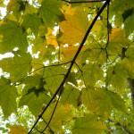 """Autumn ceiling"" by EmilyKB"